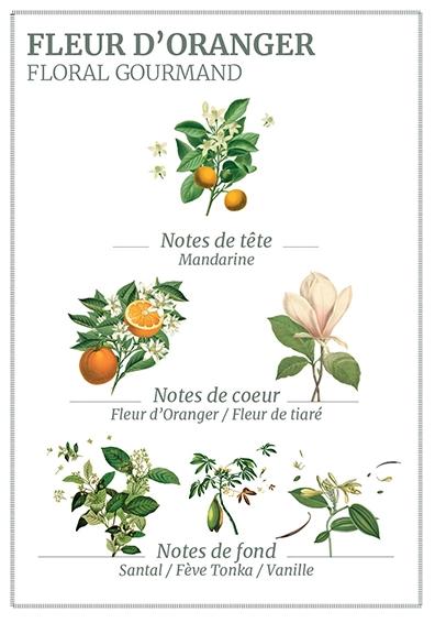 parfum panier des sens lotion.PNG